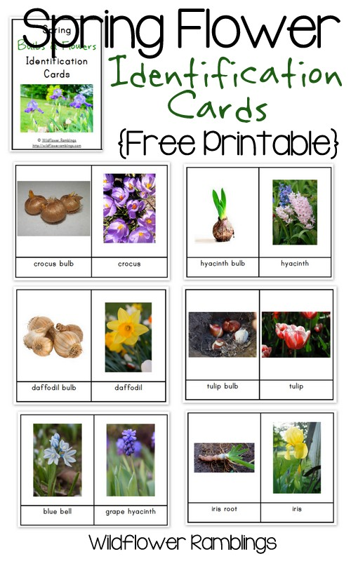 Spring Bulb & Flower Identification Cards